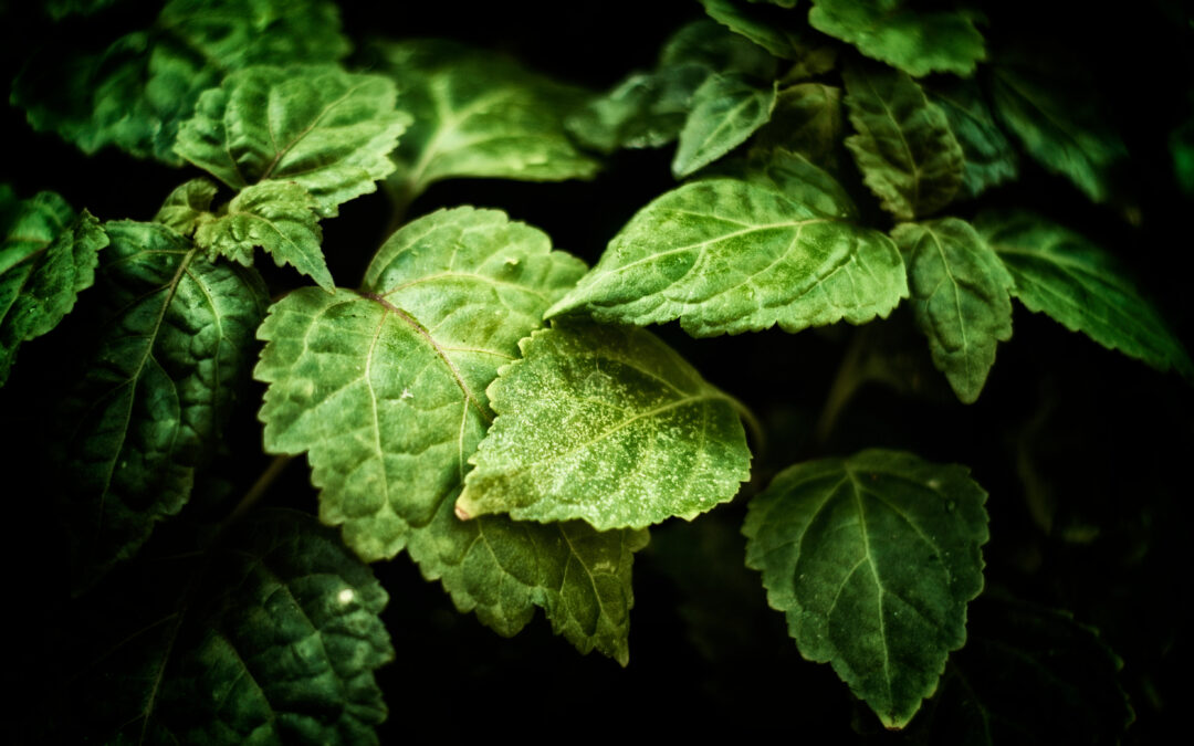Patchouli means authenticity in the fabrics industry, want to know why?